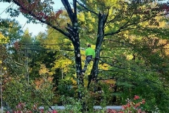 augusta-maine-tree-removal-3