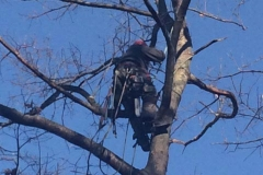 augusta-maine-tree-removal-6