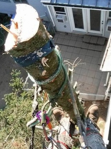 central-maine-tree-removal-1