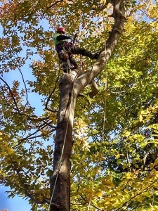 central-maine-tree-removal-2