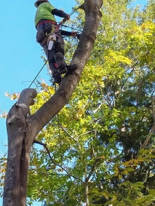 central-maine-tree-removal-3