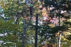 augusta-maine-tree-removal-1