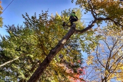 central-maine-tree-removal-4